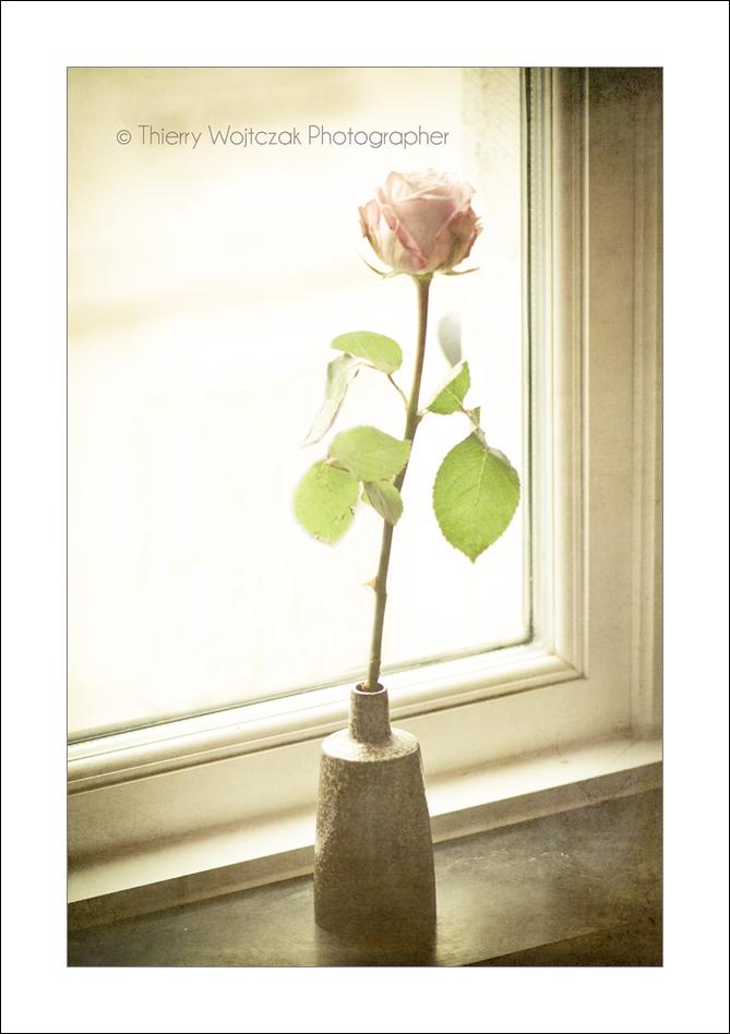 rose_on