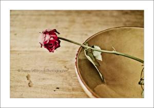 rosefanee_on