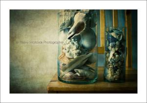 shells_on