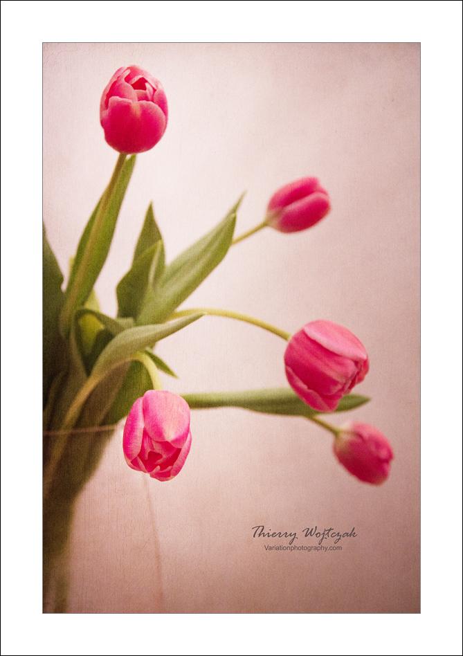 tulipe2on