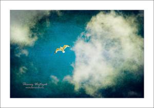 oiseau_on